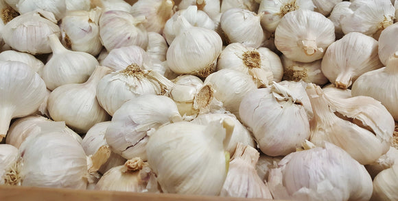 Garlic - Foster Family Farm