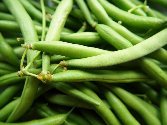 Green Beans - Foster Family Farm