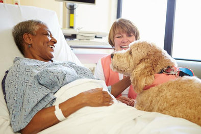 Person, How To Become a Pet Therapy Team with Your Dog and Make A Difference Today