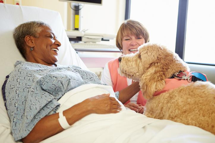 How To Become a Pet Therapy Team with Your Dog and Make A Difference Today