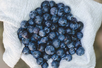 3 Reasons to Feed Your Dog Blueberries