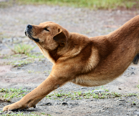 Dog stretching and warming up exercises