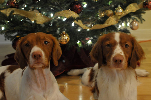 Christmas tree dogs holidays
