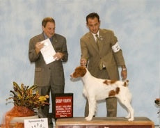 AKC Show Dog Group Win Brittany