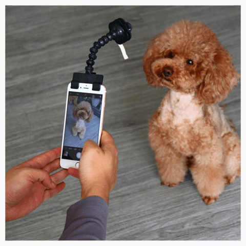 Perfect Pet Selfie Stick