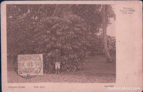 east java - robusta coffee - oost java - quillou koffie - old card