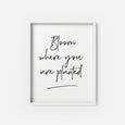Bloom where you are planted - THE PRINTABLE CONCEPT - Printable art posterDigital Download -