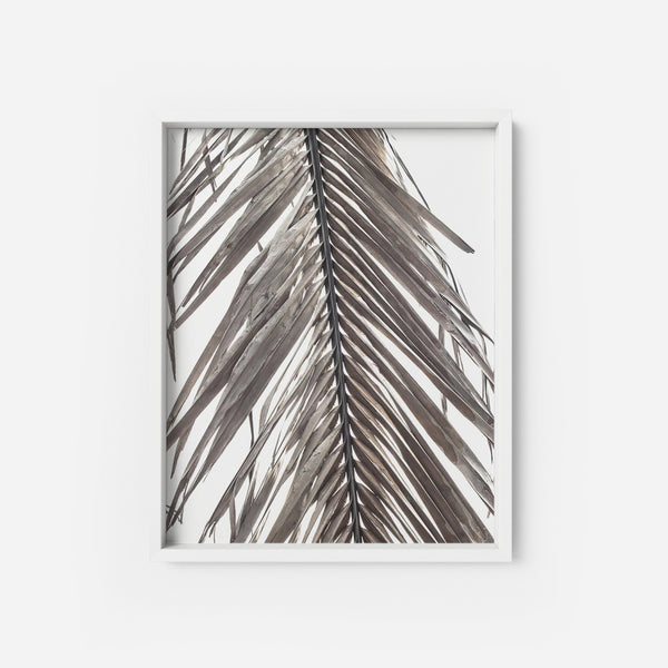 Dried Palm Leaf - THE PRINTABLE CONCEPT - Printable art posterDigital Download -