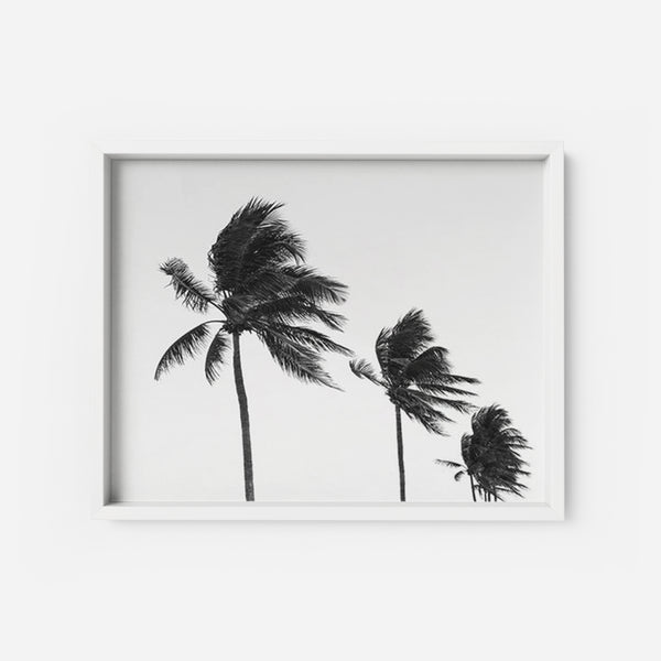 Palm Tree 2 - THE PRINTABLE CONCEPT - Printable art posterDigital Download -
