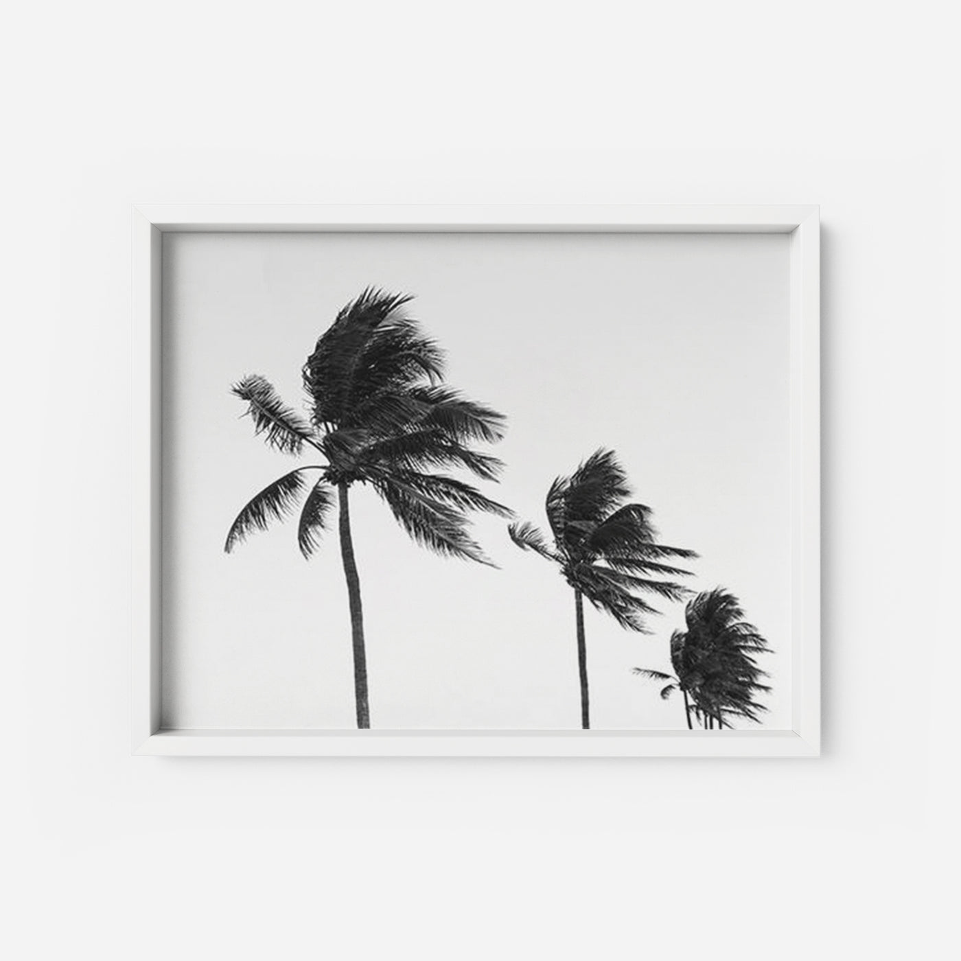 picture about Palm Tree Printable identified as Palm Tree 2