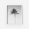 Palm Tree 3 - THE PRINTABLE CONCEPT - Printable art posterDigital Download -