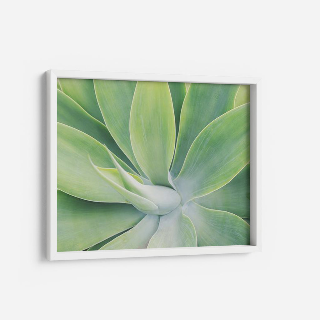 Agave - THE PRINTABLE CONCEPT - Printable art posterDigital Download -