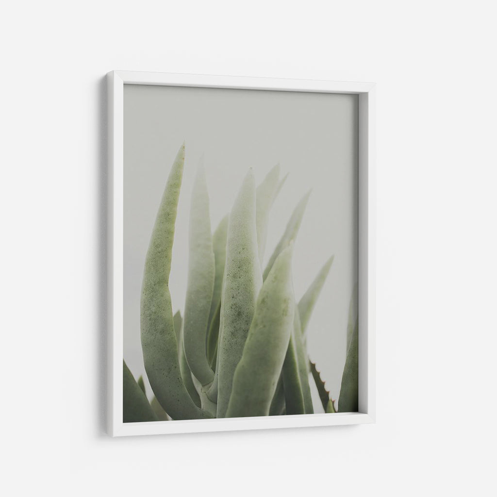 Succulent - THE PRINTABLE CONCEPT - Printable art posterDigital Download -
