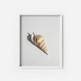 Turritella Shell - THE PRINTABLE CONCEPT - Printable art posterDigital Download -