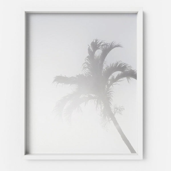 Arecaceae - THE PRINTABLE CONCEPT - Printable art posterDigital Download -