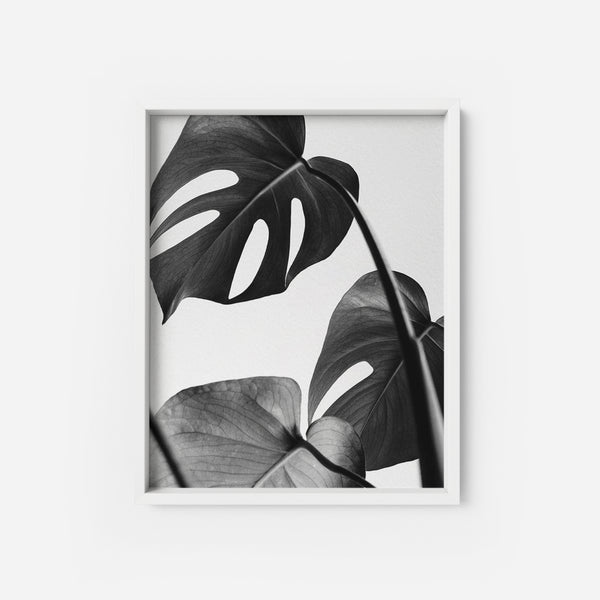 Monstera Deliciosa - THE PRINTABLE CONCEPT - Printable art posterDigital Download -