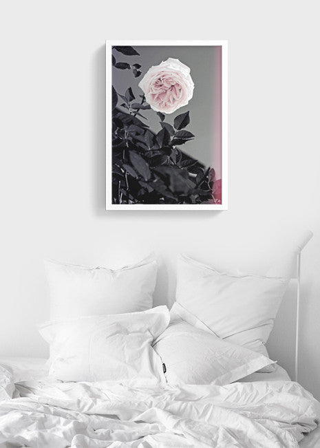 Pink Roses Printable wall Art Fashion Poster - Flowers Bloom photography modern art