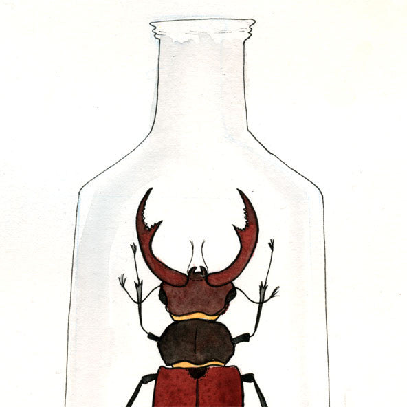 Beetle in a Jar