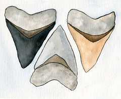 Shark Tooth Art - Shark Tooth Print  - Watercolor - 8x10