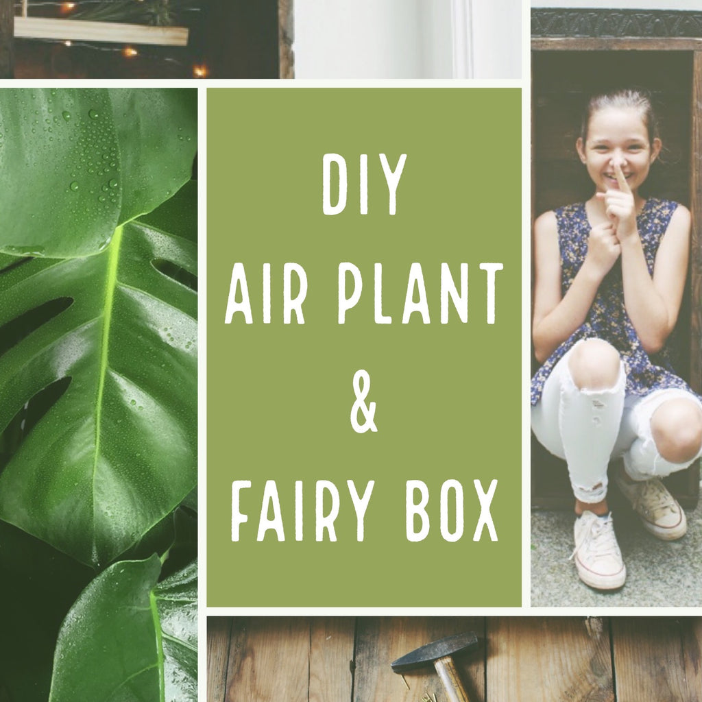 DIY Air Plant & Fairy Box