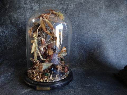 Bell Jar Full of Insect Specimens - Insect Environment 1B by Collin Stringer - A2324