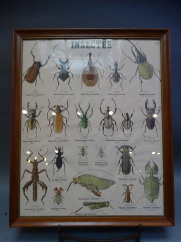 "French ""Insectes"" Chart"