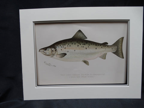 """Male Land Locked Salmon"" Lithograph"