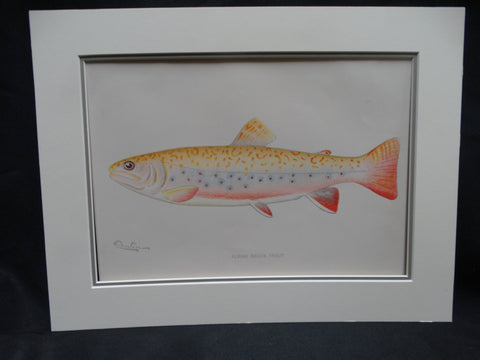 Albino Brook Trout Audubon Society Print