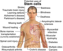 StemEnhance® Ultra  The ultimate stem cell support.