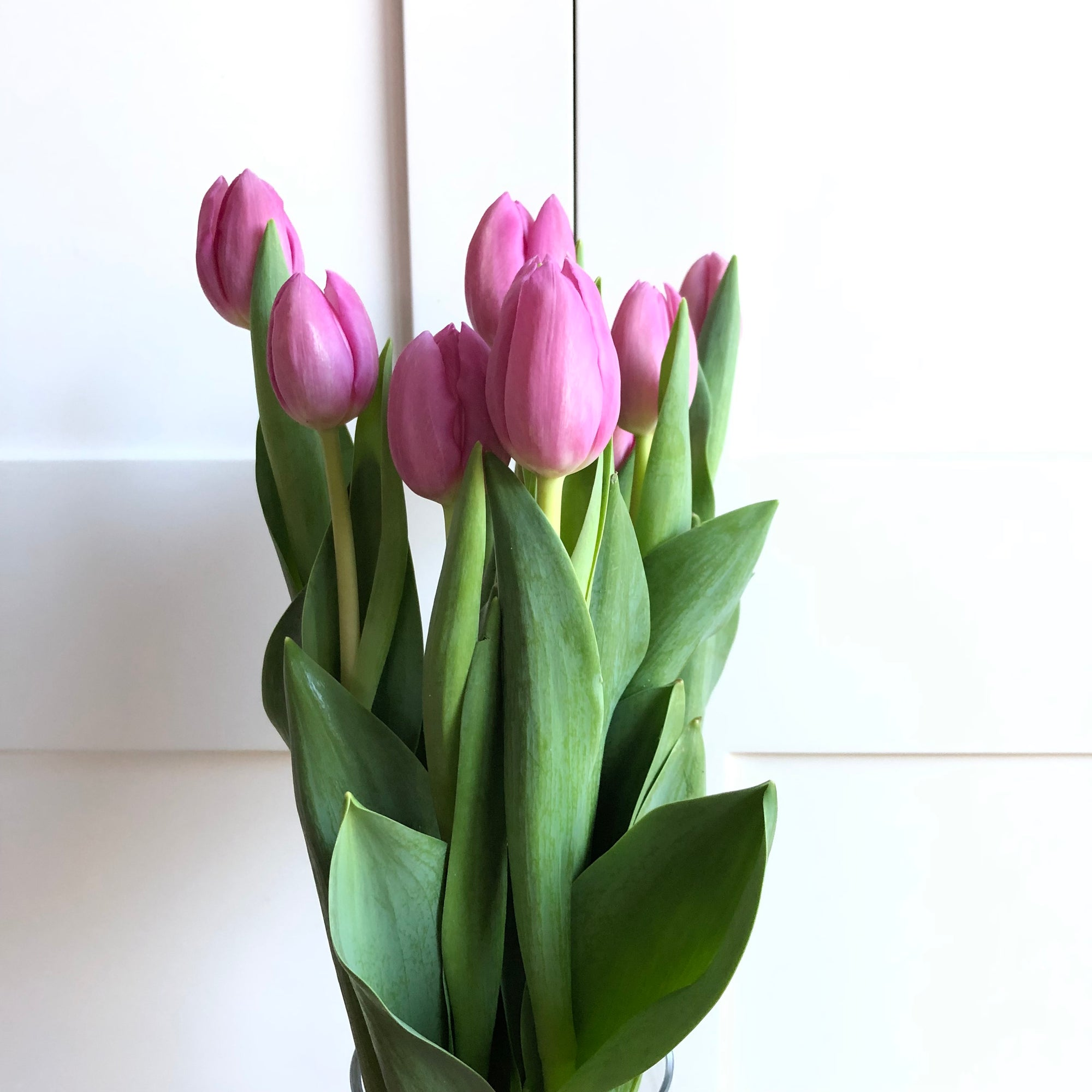 Tulips from Sydney Flower Markets