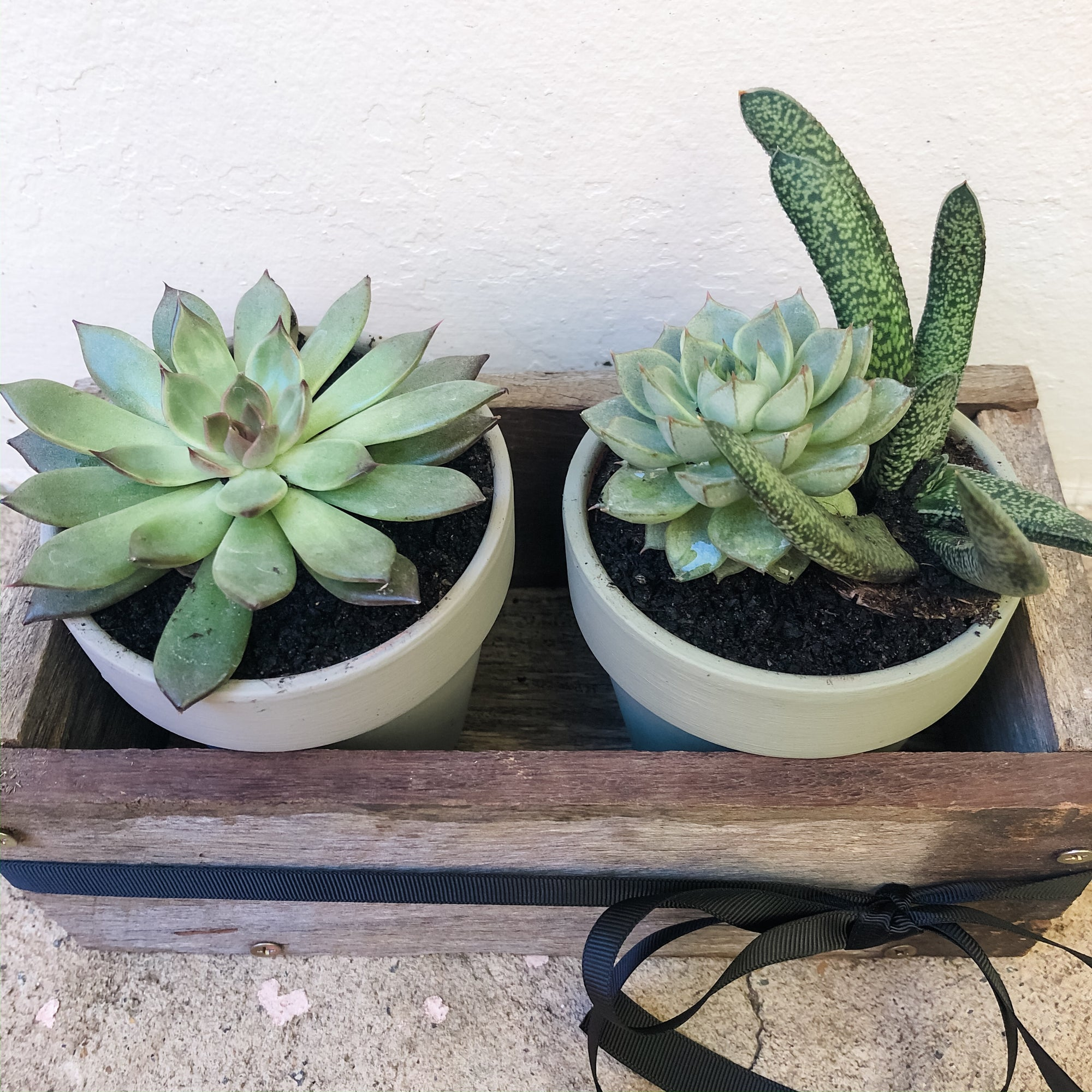 Succulent Pots in a Recycled Box