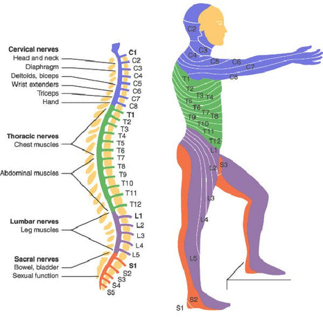 SCI - Spinal Cord Injury - Paraplegic