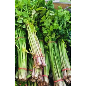 CHINESE CELERY / Cutting Celery 'Amsterdam' - Boondie Seeds