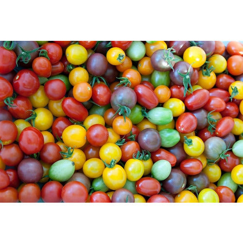 TOMATO 'Heirloom Cherry Mix'