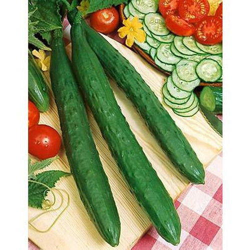 CUCUMBER 'Tasty Green F1' - Boondie Seeds