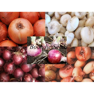 ONION 'Heirloom Mix' - Boondie Seeds