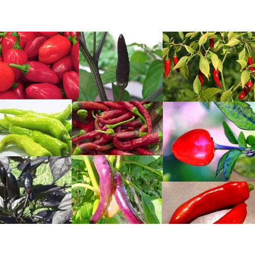 CHILLI VARIETY PACK - 12 packets - Boondie Seeds