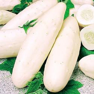 CUCUMBER 'White Spine' - Boondie Seeds