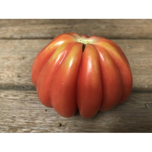 TOMATO 'Pink Accordian' seeds