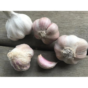 GARLIC BULBS - Italian Pink - Boondie Seeds