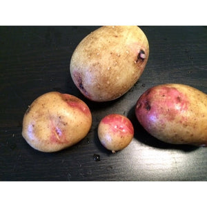 SEED POTATO - King Edward - Boondie Seeds