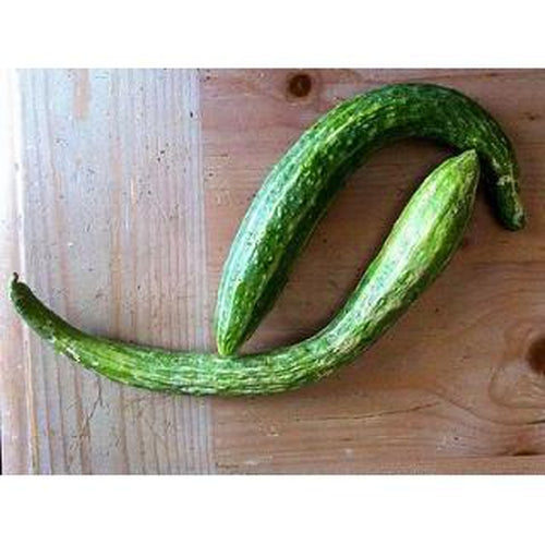 ORIENTAL CUCUMBER 'Suyo Long'