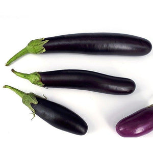 Eggplant 'Italian Long Purple' - Boondie Seeds