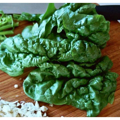 SPINACH 'Bloomsdale Longstanding' seeds