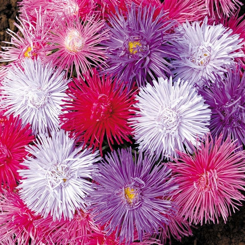 ASTER 'Giant Ray'