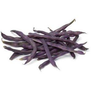 BEAN 'Purple King' - Boondie Seeds