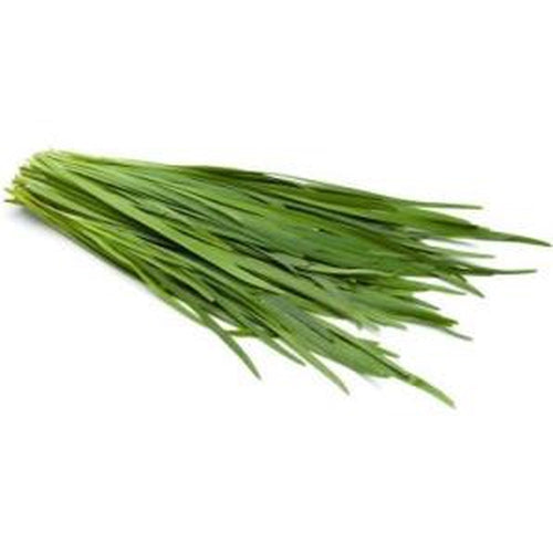 CHIVES 'New Belt' Flat leaf