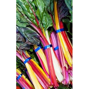 SILVERBEET 'Rainbow Mix' 100+ seeds - Boondie Seeds