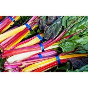 SILVERBEET 'Rainbow Mix' 35+ SEEDS - Boondie Seeds