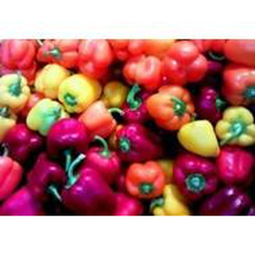 CAPSICUM MINI SWEET MIX - Boondie Seeds